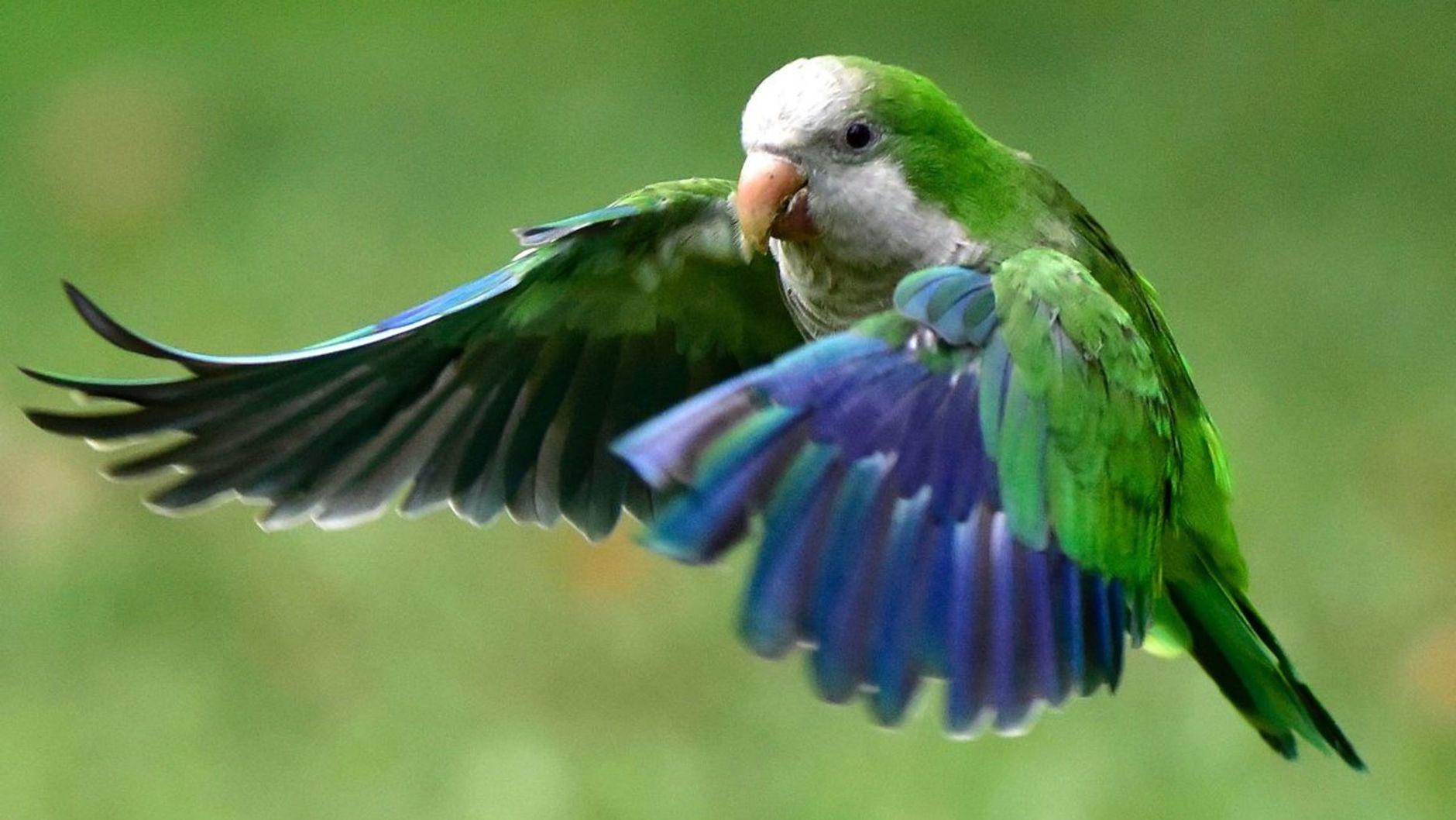 Perroquet qui a fait un achat sur Amazon